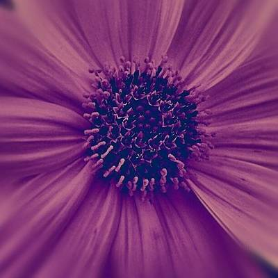 Follow Photograph - Purple by Emanuela Carratoni