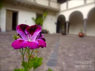 Flower Photograph - Purple  by Fernanda Travensolli