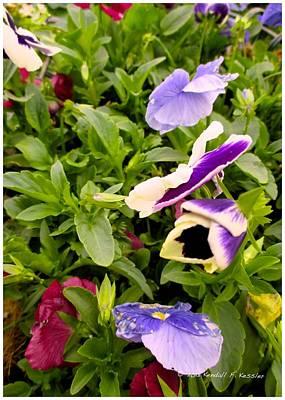 Photograph - Purple Flip by Kendall Kessler