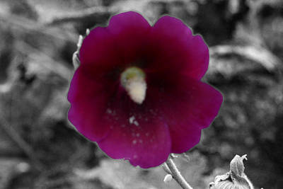 Photograph - Purple Flower 3 by Jim Martin