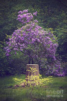 Dreamy Pink Park Scene Photograph - Purple Flower Bush by Svetlana Sewell