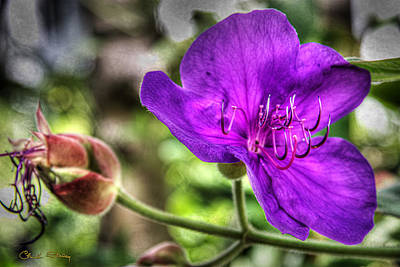 Photograph - Purple Flower by Chuck Staley