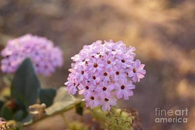 Photograph - Purple Flower Clusters by Kerri Mortenson