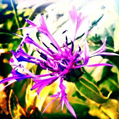 Botanical Photograph - Purple Flower by Jason Michael Roust