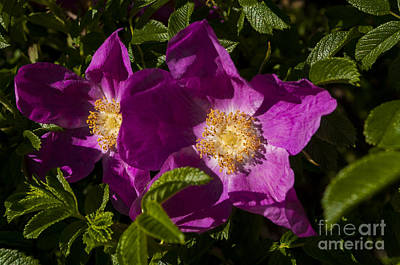 Colorful Photograph - Purple Flower by Mandy Judson