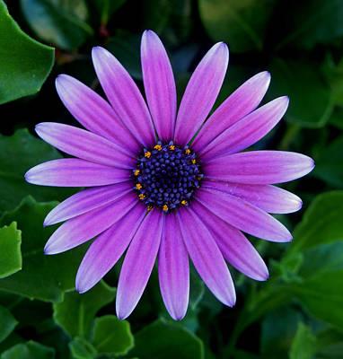 Purple Flower Art Print by Pamela Walton