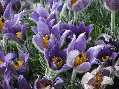 Photograph - Purple Flower Power by Jaclyn Hughes Fine Art