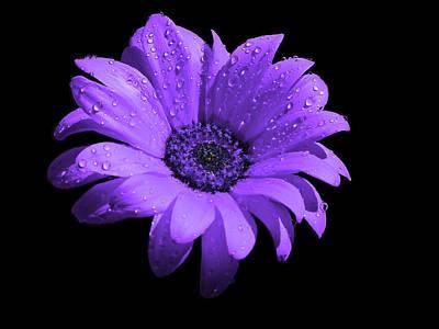 Purple Flower With Rain Art Print by Bruce Nutting
