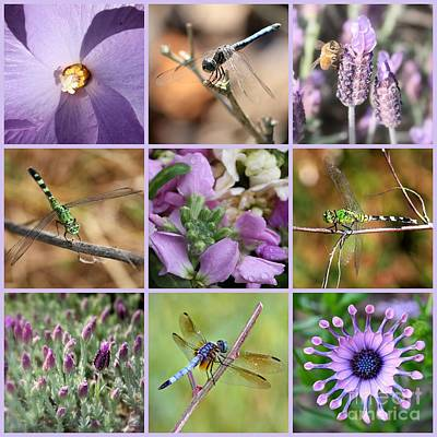 Photograph - Purple Flowers And Dragonflies Collage by Carol Groenen