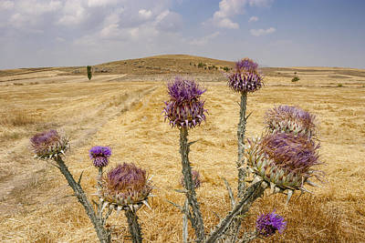 Photograph - Purple Flowers And Sutlac Mound by Ali Kabas