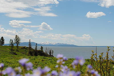Photograph - Purple Flowers At Yellowstone Lake by Robert  Moss