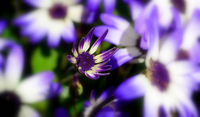 Photograph - Purple Flowers by Barbara Walsh
