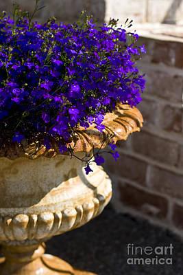 Photograph - Purple Flowers by Brian Jannsen