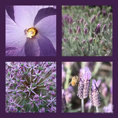 Shadows And Light Photograph - Purple Flowers Collage by Carol Groenen