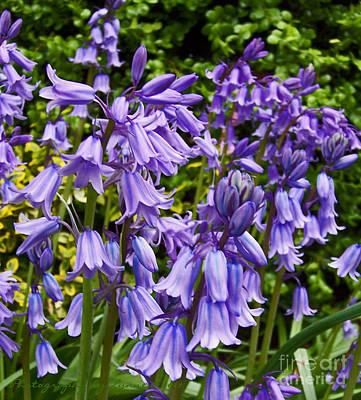 Photograph - Purple Flowers by Gena Weiser