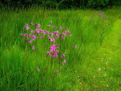 Photograph - Purple Flowers In A Green Irish Field by James Truett