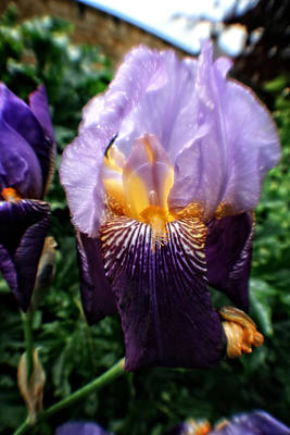 Photograph - Purple Flowers In England by Doc Braham