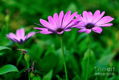 Photograph - Purple Flowers by Joe  Ng