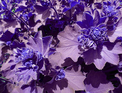 Art Print featuring the photograph Purple Flowers by Laurie Tsemak