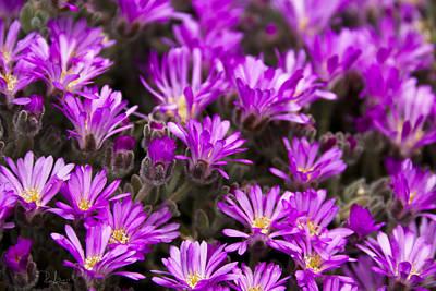 Photograph - Purple Flowers by Raffaella Lunelli