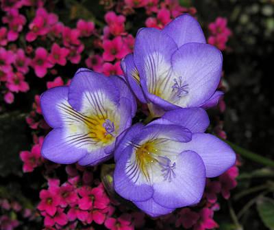 Photograph - Purple Flowers by Robert Lozen