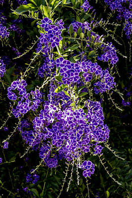 Digital Art - Purple Flowers by Photographic Art by Russel Ray Photos