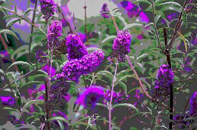Art Print featuring the photograph Purple Flowers by Suzanne Powers