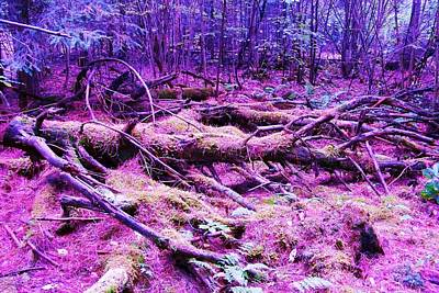 Photograph - Purple Forest by Al Fritz