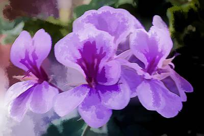 Purple Geraniums  Art Print