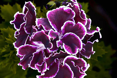Art Print featuring the digital art Purple Gernaium by Photographic Art by Russel Ray Photos
