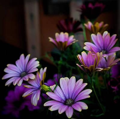 Photograph - Purple Glory by Cherie Duran