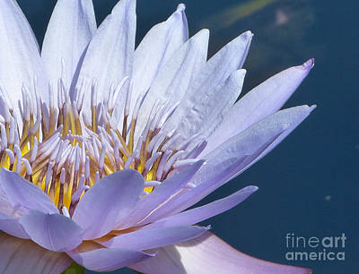 Photograph - Purple Glory II by Marguerita Tan