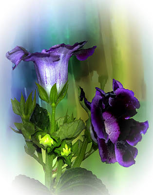 Gloxinias Photograph - Purple Gloxinia II by Judy  Johnson