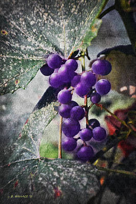 Purple Grapes - Oil Effect Art Print by Brian Wallace
