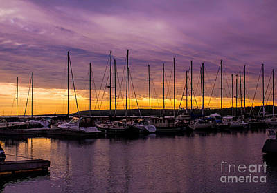 Photograph - Purple Haze And Golden Mornings by Barbara McMahon