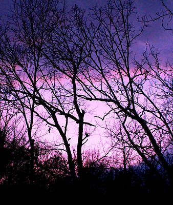 Print featuring the photograph Purple Haze by Candice Trimble