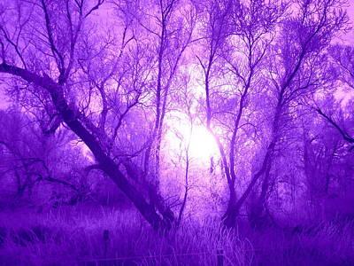 Photograph - Purple Haze by Bonfire Photography