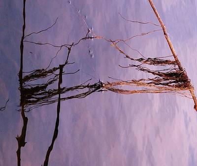 Photograph - Purple Haze by Todd Sherlock