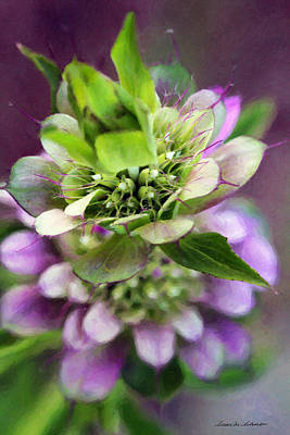Purple Horsemint Wildflower Art Print