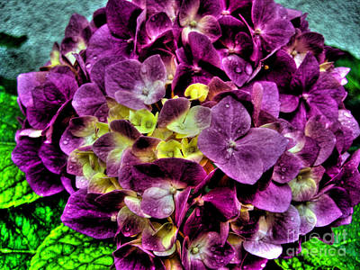 Photograph - Purple Hortensia After Summer Rain by Nina Ficur Feenan