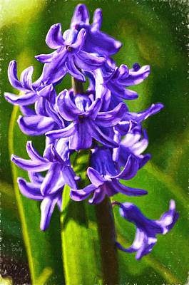 Spring Bulbs Painting - Purple Hyacinth  by Sandi OReilly