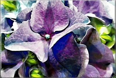 Purple Hydrangea  Flower Art Print by Danielle  Parent