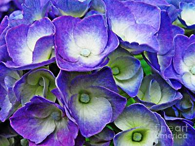 Purple Hydrangea Photograph - Purple Hydrangea by Sarah Loft