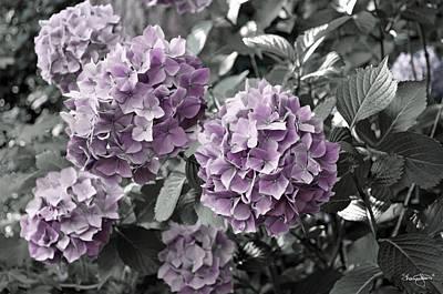 Photograph - Purple Hydrangea- Selective Color by Shanna Hyatt