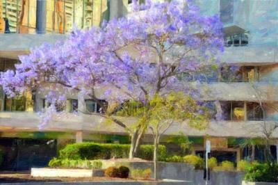 Tree Blossoms Mixed Media - Purple In Winter by Phillip J Gordon