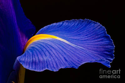 Photograph - Purple Iris #1 2010 by Art Barker