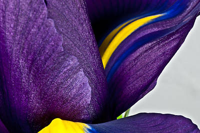 Photograph - Purple Iris  #2 2010 by Art Barker