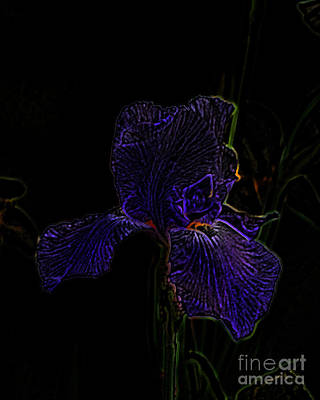 Photograph - Purple Iris by Amanda Collins