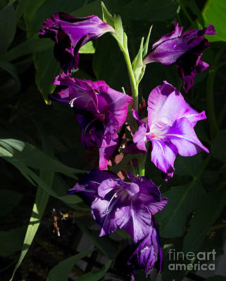 Purple Iris Art Print by B Wayne Mullins