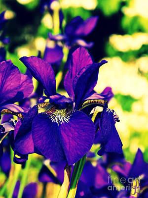 Photograph - Purple Iris Cross Process by Mindy Bench